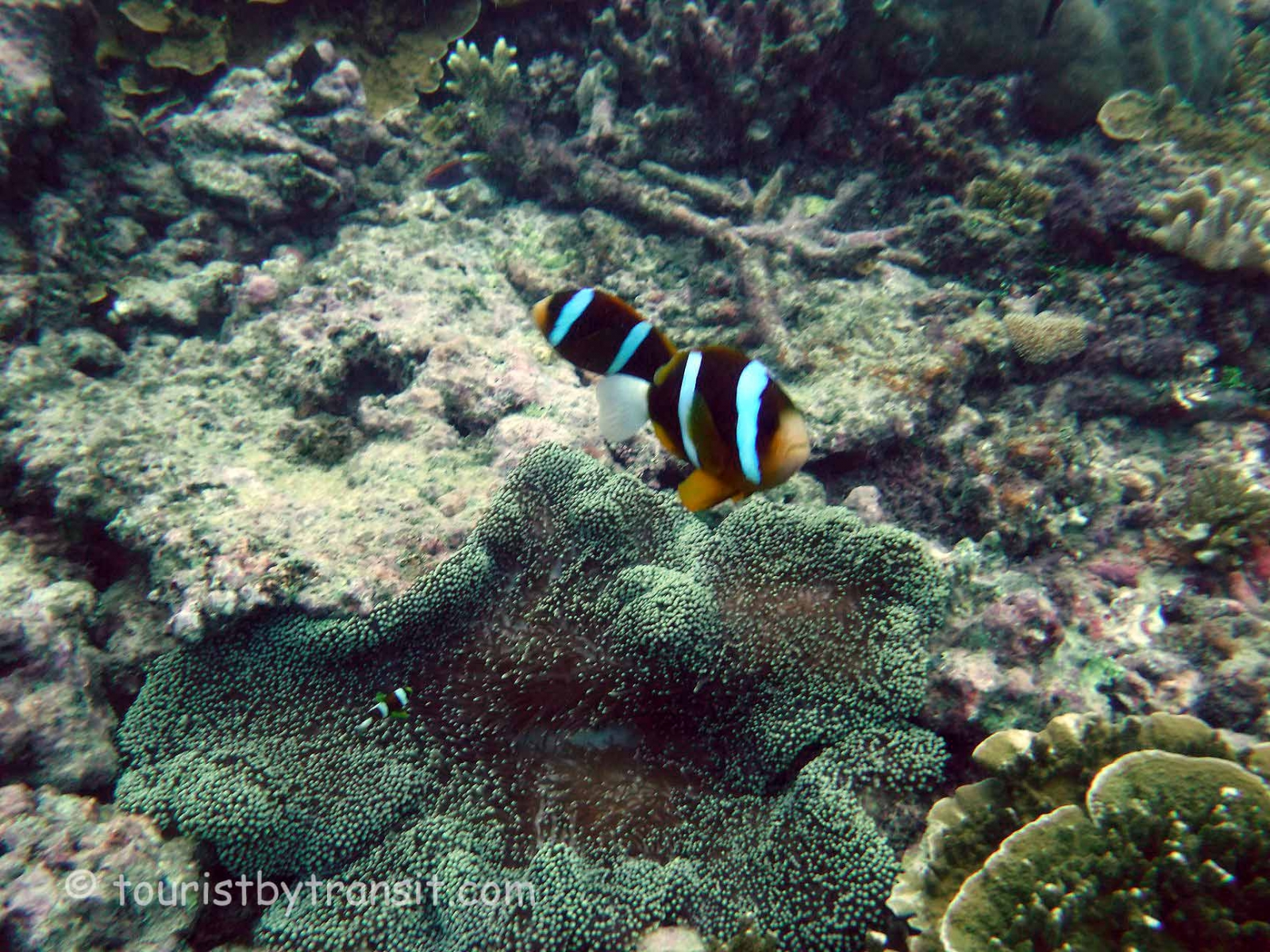 GreatBarrierReef-190322-07