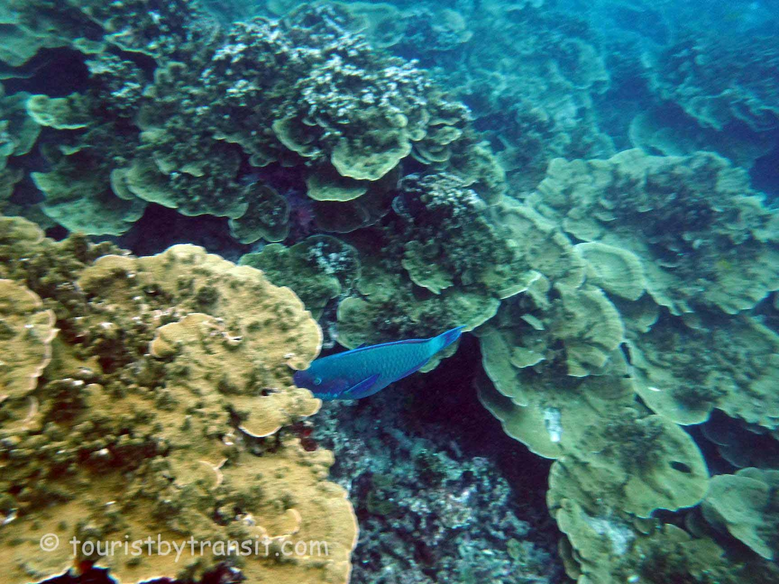 GreatBarrierReef-190322-13