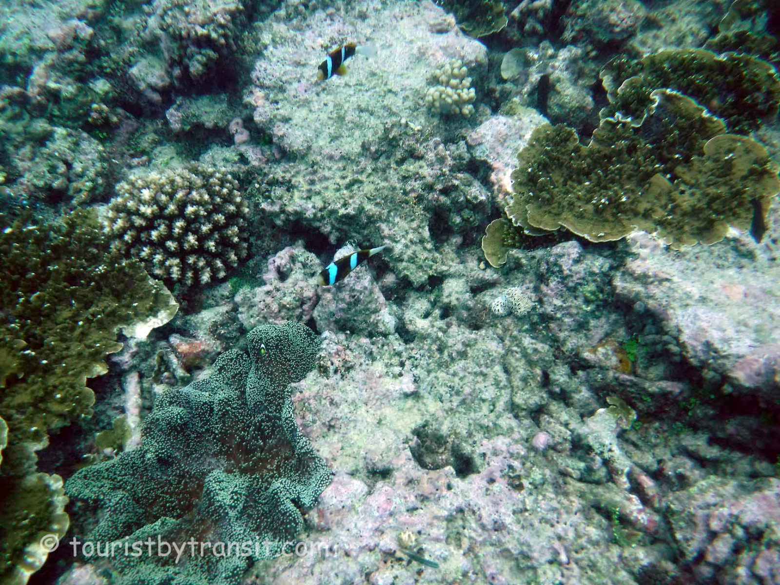 GreatBarrierReef-190322-21